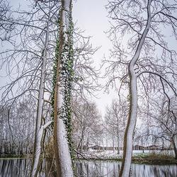 Winters Joure