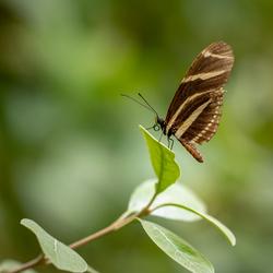 Blijdorp - Amazonica