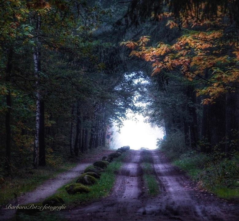 Volop herfst in het bos  -
