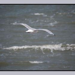 Meeuw in vogelvlucht
