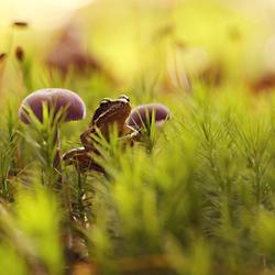 paddenstoel en..