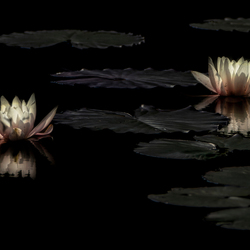 Glow in the dark Lilies