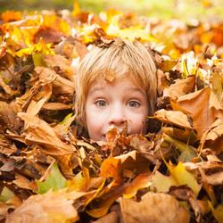 Heel veel herfstbladeren