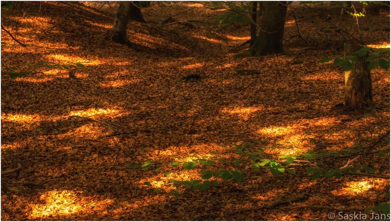 Follow the lights - Het leek wel herfstspeurtocht gisteren in het bos... Een mooie route, uitgezet met behulp van  prachtig licht, naar reeds gevallen