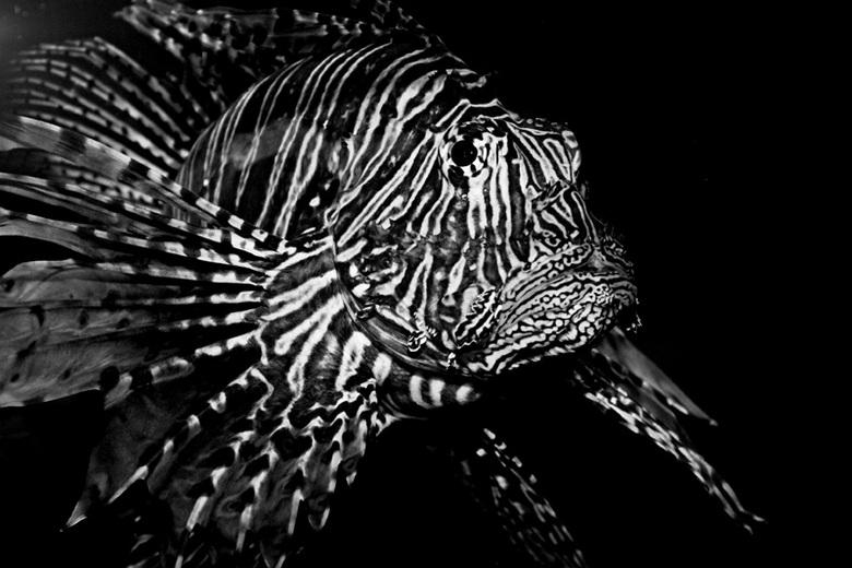 Angry fishy - Dierentuin Antwerpen
