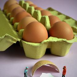MINI - eieren