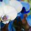 een orchidee...............