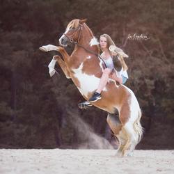 A horse, a girl and an owl
