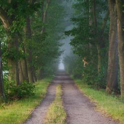 Bos in ochtend mist