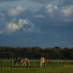 Paard met vogelconfetti.jpg