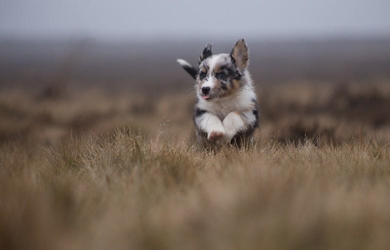 puppy in kleur