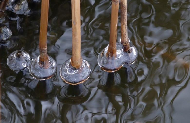 Kling klong - Honderden rietstengels met onderaan de stengels kleine ijsbolletjes, mooi helder. Door de wind waaiden ze zachtjes tegen elkaar aan, waa