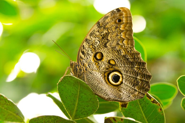 vlinder - ...
