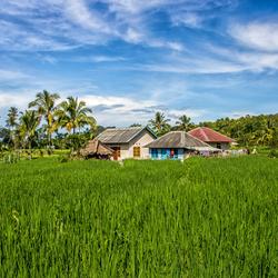 Living in the Green, Tetebatu (Indonesia)