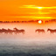 Horses in the mist.........