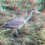 Reiger (Heron) Kralingse-Bos Rotterdam 3D