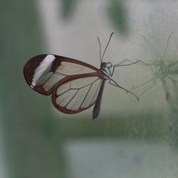 vlinder in spiegelbeeld