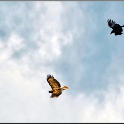 Het lucht gevecht.