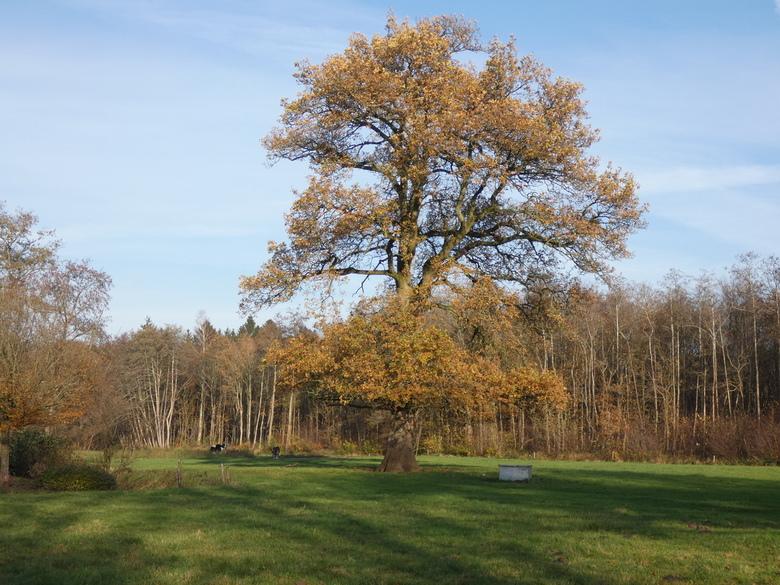 Tree - Onderweg tijdens fietstochtje vastgelegd