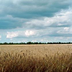 Zomers veld