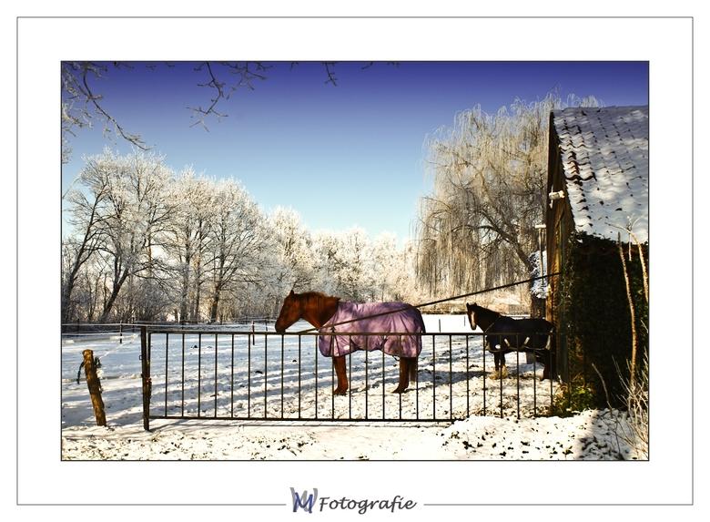 Horse in snow - Iedereen nog bedankt voor de reactie op mijn vorige upload.