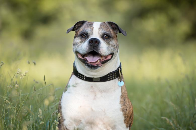 Champion... - De laatste tijd heb ik veel fotoshoots van honden die erg ziek/oud zijn en die niet meer zo lang te leven hebben.<br /> Ik vind het erg