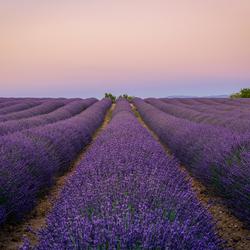Gordes, lavendel bij zonsondergang...