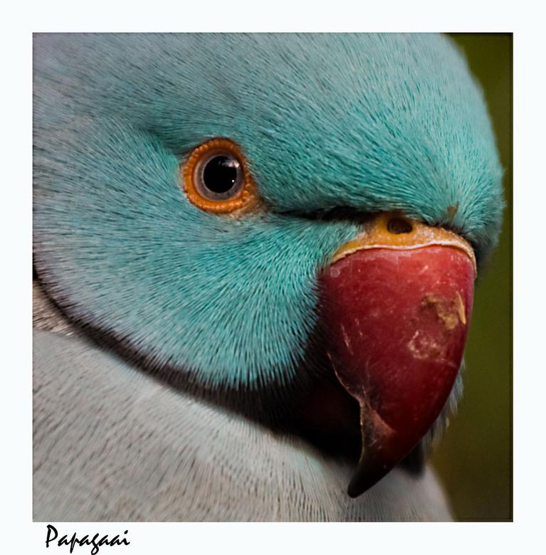 Onwijs Blauwe papegaai | Dieren foto van janpeter1985 | Zoom.nl CI-01
