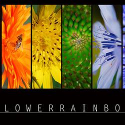 FlowerRainbow