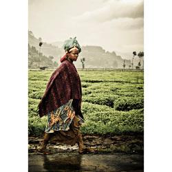 Rwandan Rain