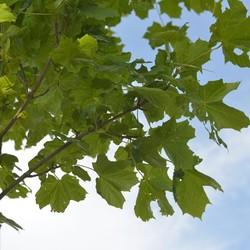 Bladeren aan een boom