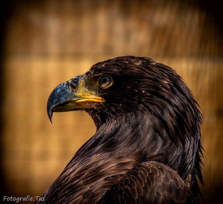 Eagle....