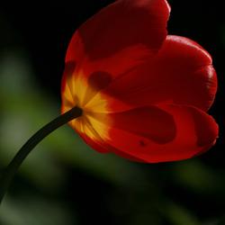 Zie de zon schijnt door de bloemen...