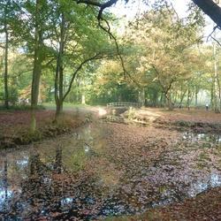 Het Liesbos in de herfst