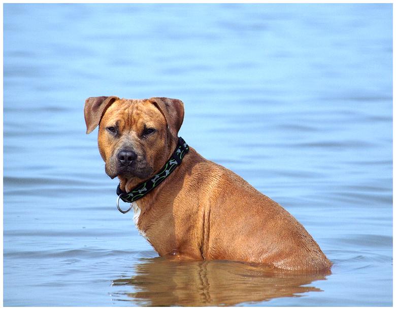 Iet wat geïrriteerd.. - Een stukje in die zee, dat ging nog wel maar dat water smaakte echt nergens naar..en het prikte ook nog eens in mijn ogen..bah