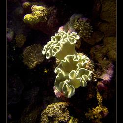 Onderwater boeket