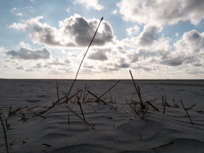 verdord gras - Langzaam stuitte zand omhoog tegen het dorre gras