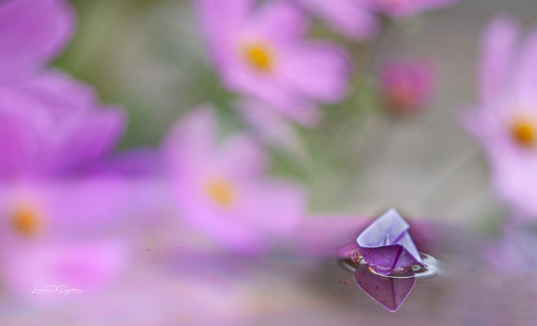 Aanmeren bij een zee van bloemen  -