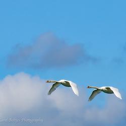 Synchroon vliegen