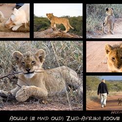 3 mnd oud leeuwtje