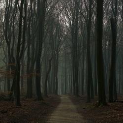 Het speulderbos met mist