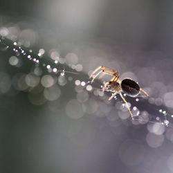 het spinnetje.jpg