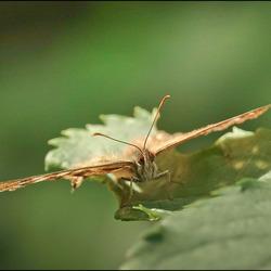 meedoen met de vlinderrage..