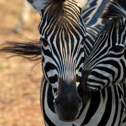 Striped love xs.jpg