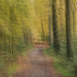 Opnieuw het bos in