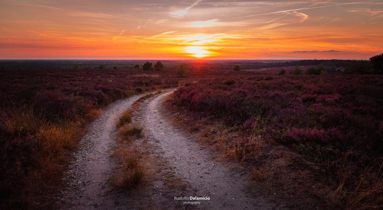 Turning Purple - Op een zomerse avond brand het zonnetje nog net boven de horizon. In de verte ligt de stad Raalte. De weg leidt je er naar toe, en ne