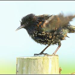 Bijzonder gewone vogel