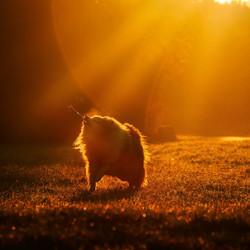 Mijn lievelings model in de ochtend zon
