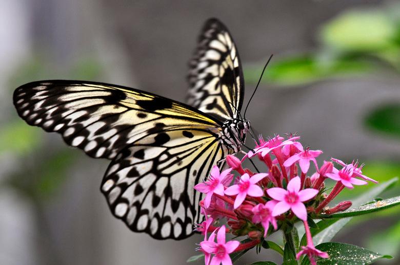 Butterfly03.jpg - Butterfly03.jpg