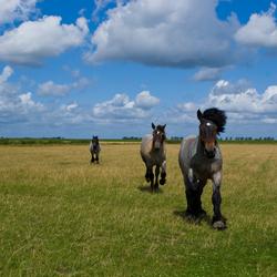 Paarden ontvangst